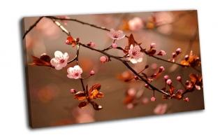 Красивое цветение японской вишни