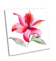 Красивые цветы лилии