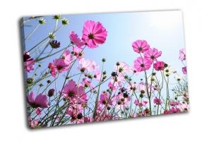 Красивые розовые цветы и голубое небо