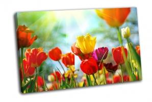 Красивые весенние цветы