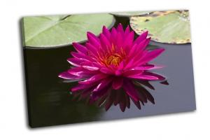 Красивый розовый цветок лотоса в водоеме