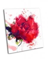 Красная роза, акварель