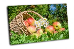 Красные сочные спелые яблоки