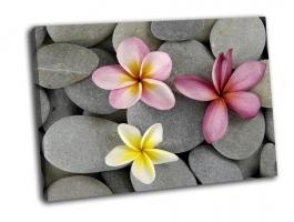 Красочные цветы франжипани на серой гальке