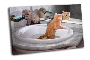 Купание котят в раковине