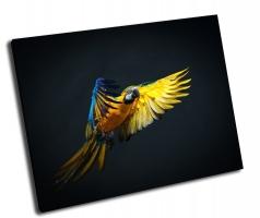 Летящий попугай Ара