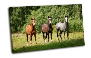 Лошади стоящие на пастбище