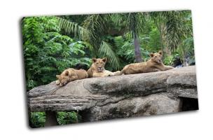 Львы в зоопарке, Индонезия