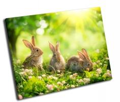 Маленькие кролики на лугу