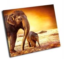Мать с слоненком на прогулке