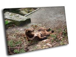 Медведь на привале