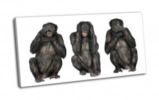 Мудрые обезьяны шимпанзе