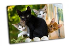 Oчаровательное семейство котят