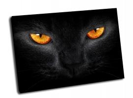 Оранжевые глаза черной кошки.