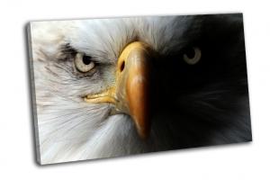 Орел крупным планом