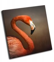 Портрет фламинго
