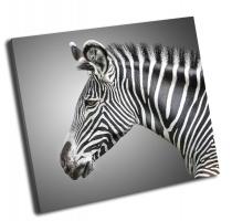 Портрет зебры на сером фоне