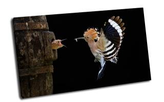 Птица кормит птинца на лету