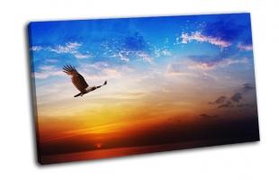 Птица на красивом закате