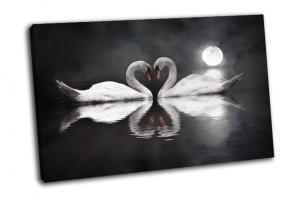 Романтический лебедь