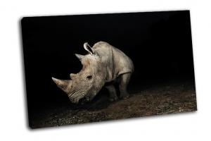 Серый носорог