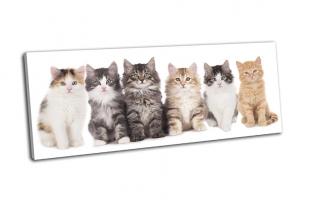 Шесть котят