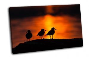 Силуэты птиц в полночь