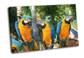 Сине-золотой попугай