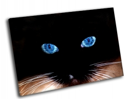 Синие глаза кошки