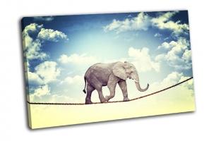 Слон акробат