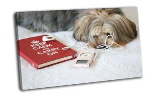 Собака и книга