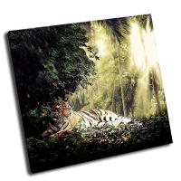 Тигр в лучах солнца