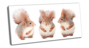 Три белочки едят фундук
