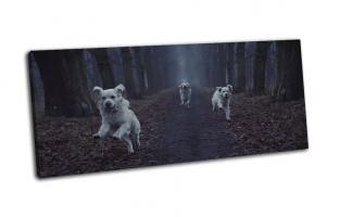 Три белые собаки в лесу
