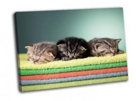 Три шотландских котенка