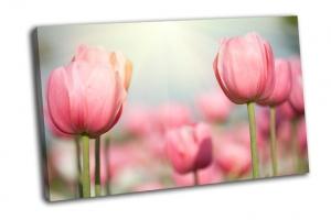 Весенние цветы тюльпаны в солнечном свете