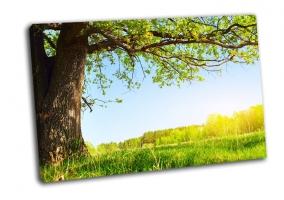 Весенний луг с большым деревом