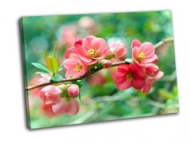 Ветка весенних цветов