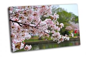 Ветка вишни в парке