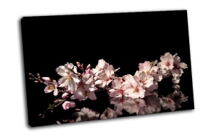 Ветвь цветущего миндаля на черном фоне