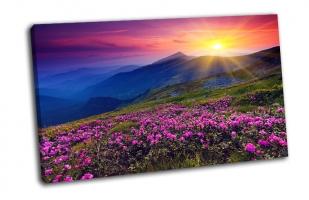 Волшебный розовый цветок рододендрон