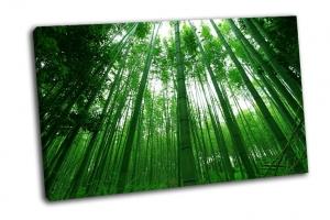 Высокий бамбуковый лес