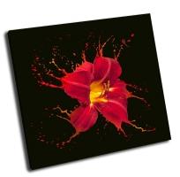 Яркий цветок с красными вкраплениями
