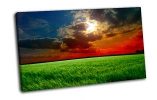Закат, колосья зеленые
