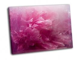 Замороженный розовый пион