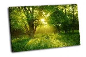 Зеленый туманный лес
