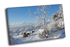 Зимний вид на деревушку