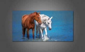Красивые лошади в воде