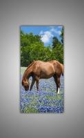 Лошадь на цветом поле