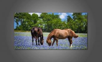 Лошади на цветом поле